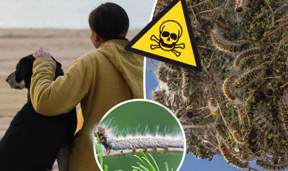 Dog-killing caterpillars 'invade' Spain as police warn owners to keep back